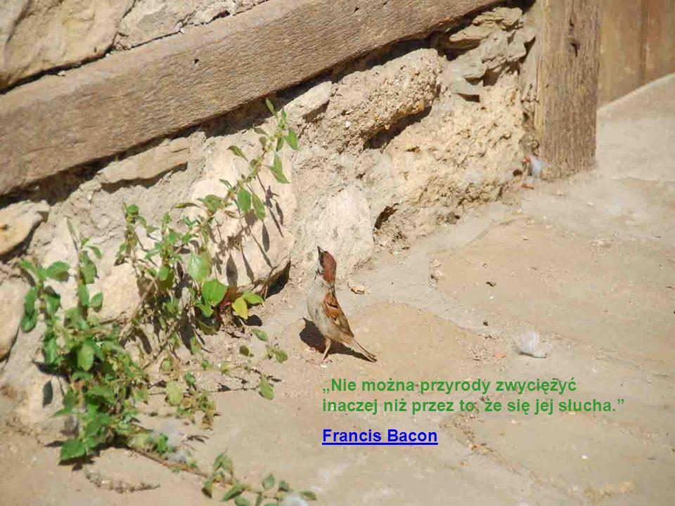 """""""Nie można przyrody zwyciężyć inaczej niż przez to, że się jej słucha"""