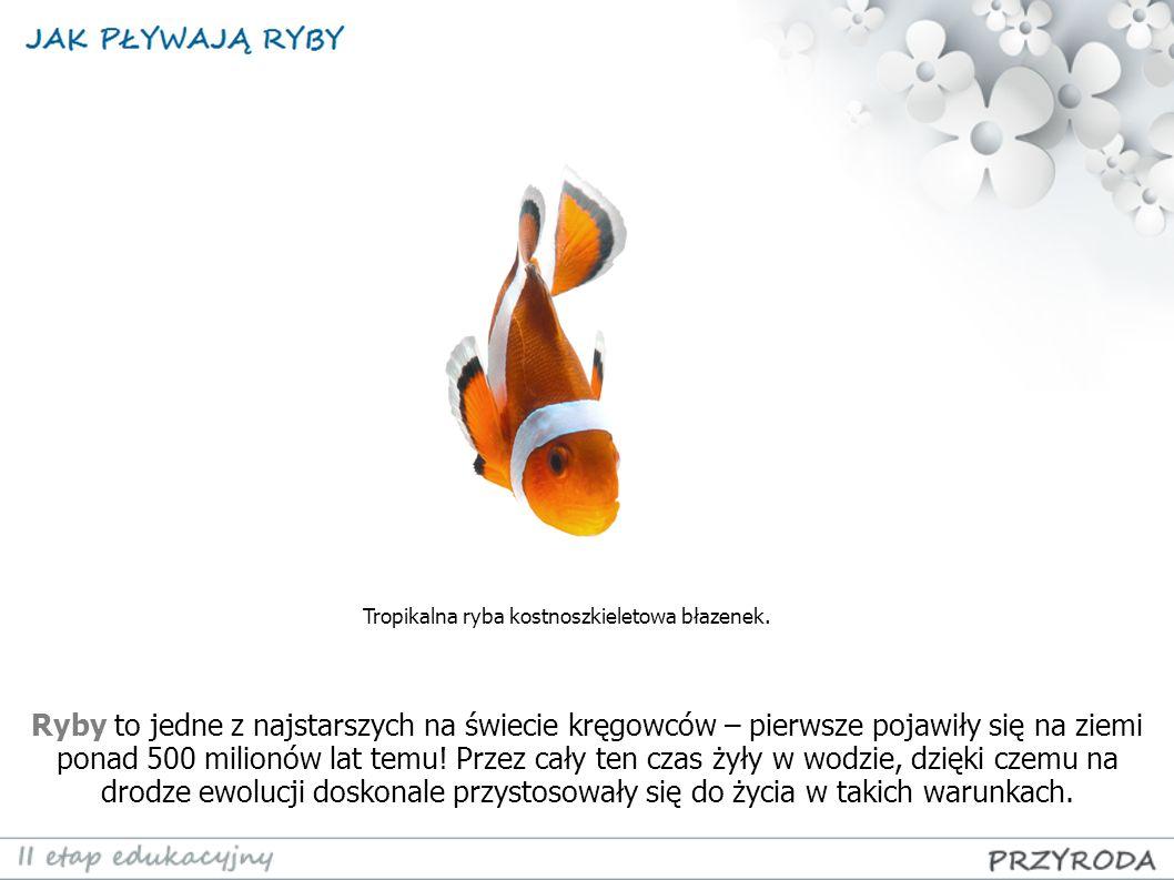 błazenek (tropikalna ryba kostnoszkieletowa)