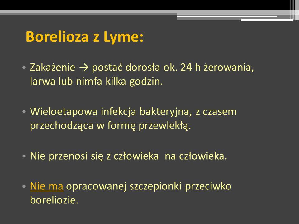 Borelioza z Lyme: Zakażenie → postać dorosła ok. 24 h żerowania, larwa lub nimfa kilka godzin.