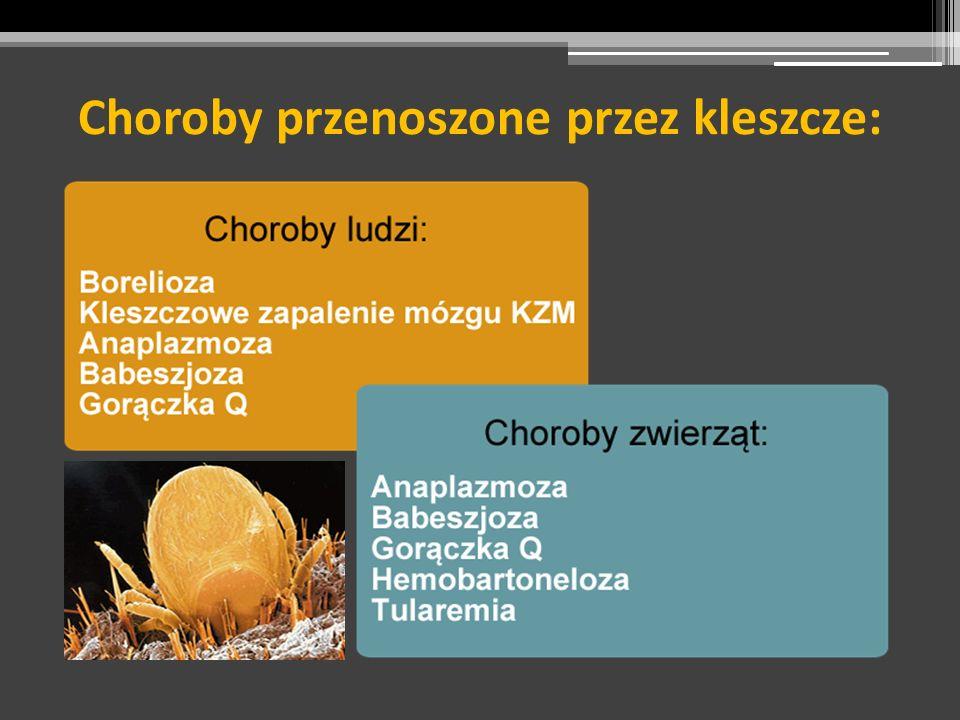 Choroby przenoszone przez kleszcze: