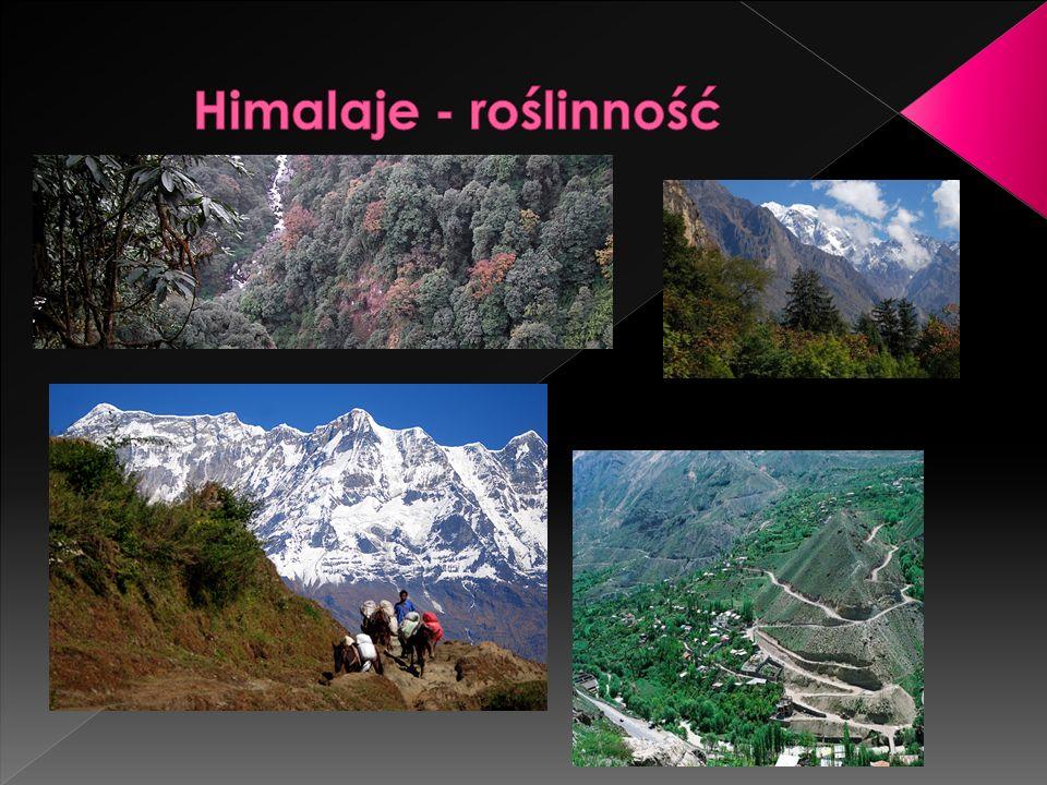 Himalaje - roślinność