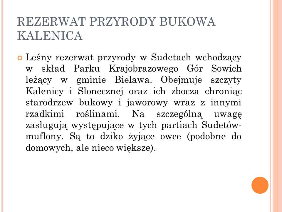 REZERWAT PRZYRODY BUKOWA KALENICA