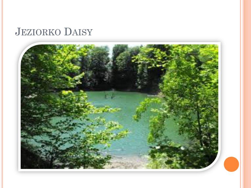 Jeziorko Daisy