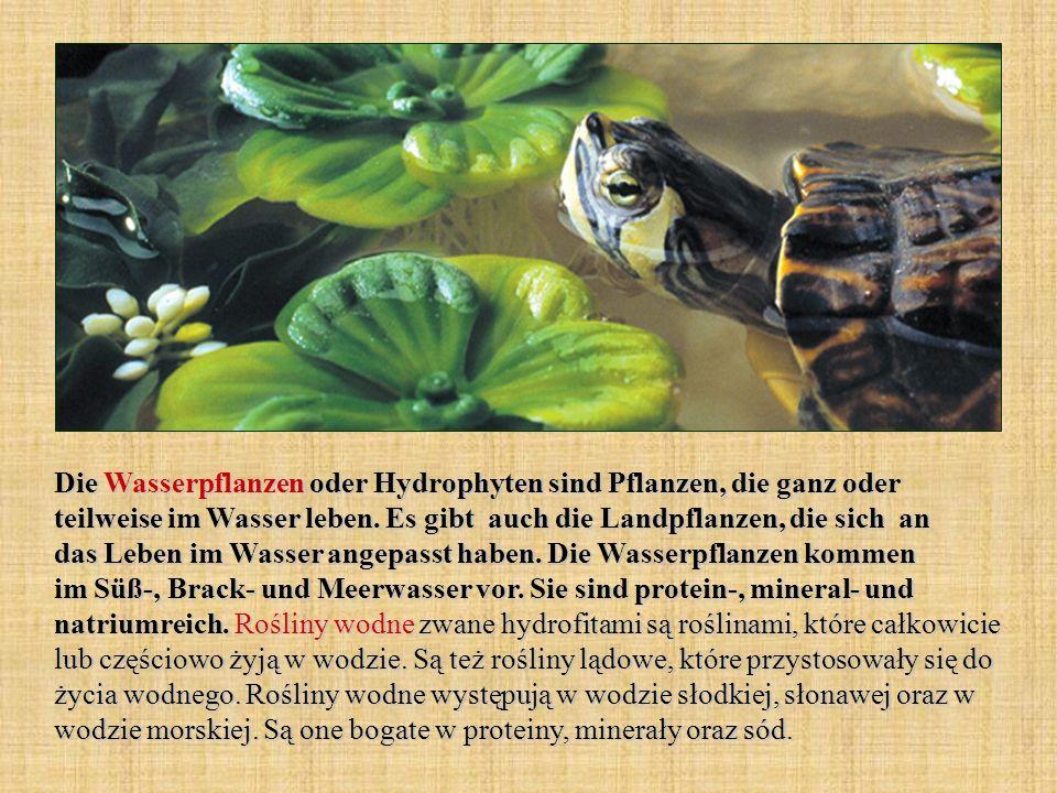 Die Wasserpflanzen oder Hydrophyten sind Pflanzen, die ganz oder teilweise im Wasser leben.