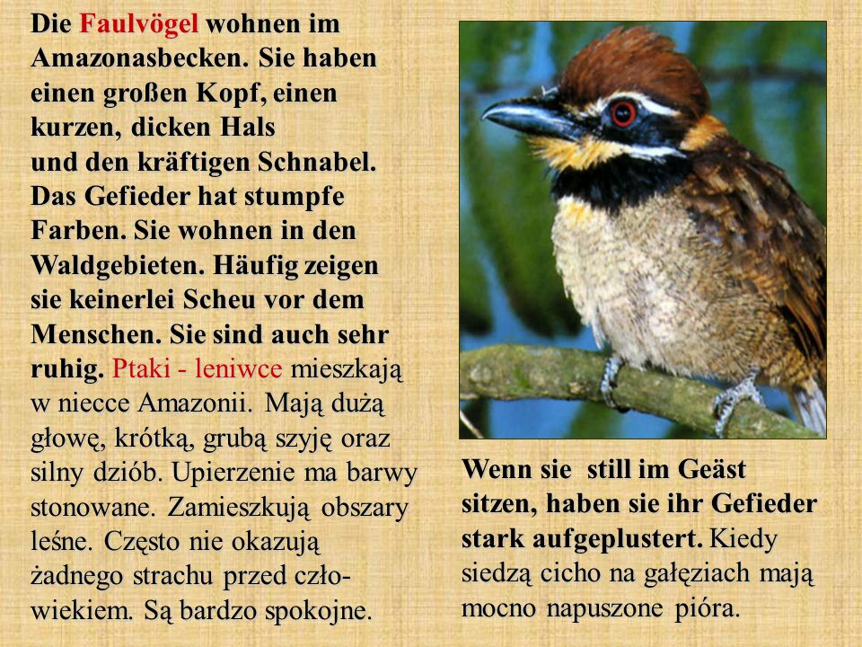 Die Faulvögel wohnen im Amazonasbecken