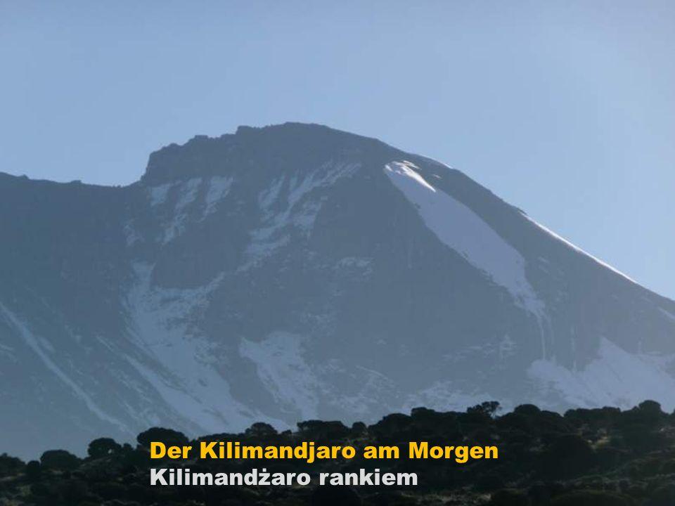 Der Kilimandjaro am Morgen
