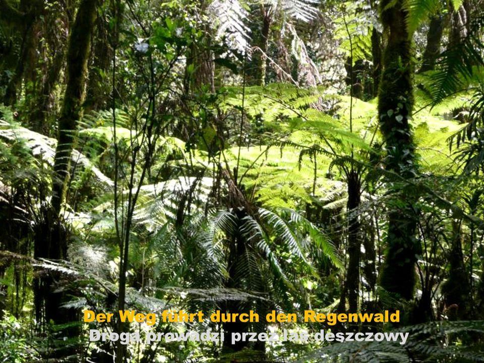 Der Weg führt durch den Regenwald