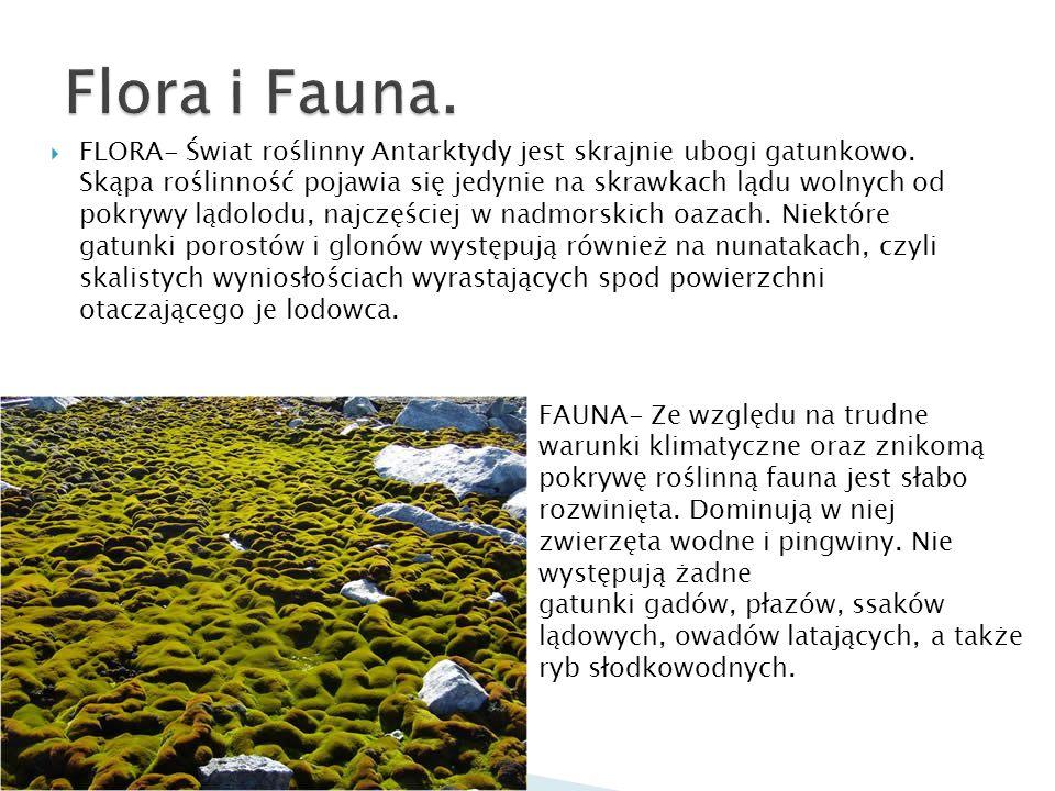 Flora i Fauna.