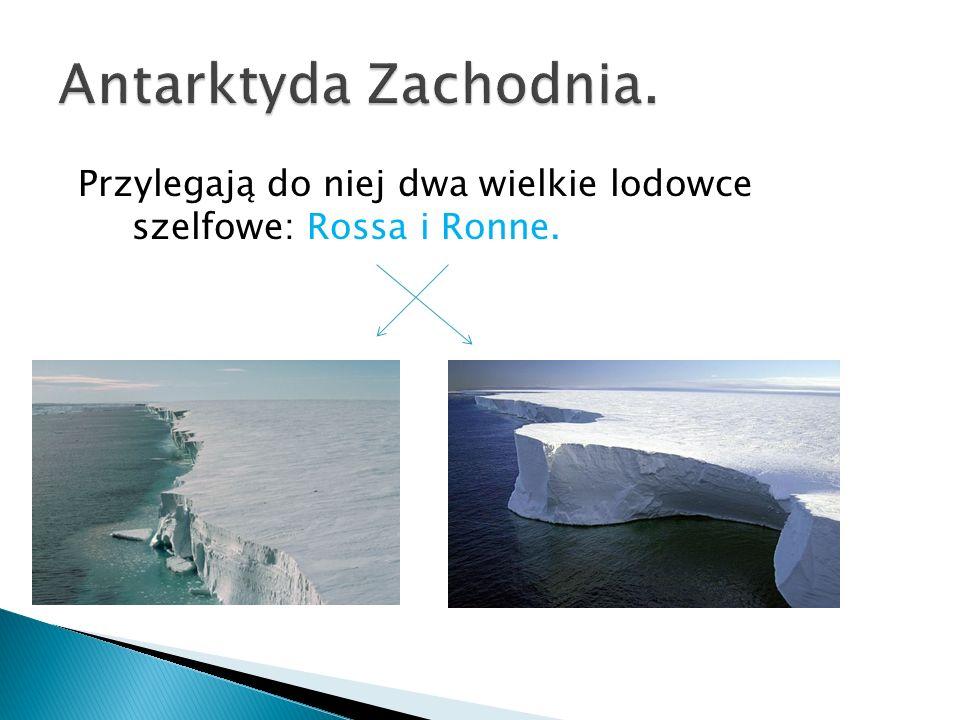 Antarktyda Zachodnia. Przylegają do niej dwa wielkie lodowce szelfowe: Rossa i Ronne.