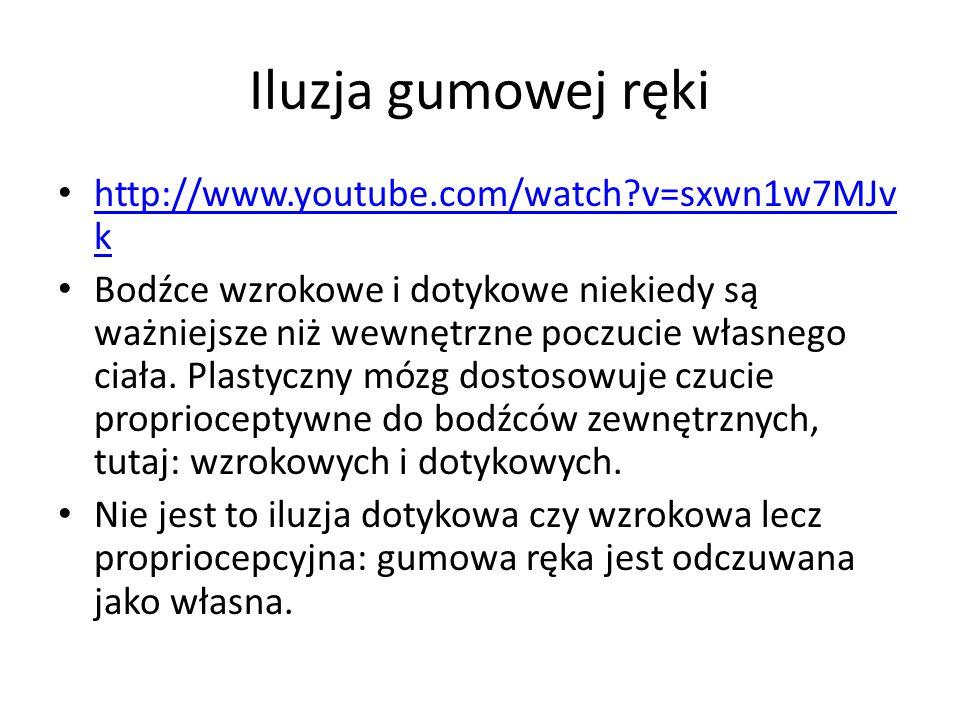 Iluzja gumowej ręki http://www.youtube.com/watch v=sxwn1w7MJvk