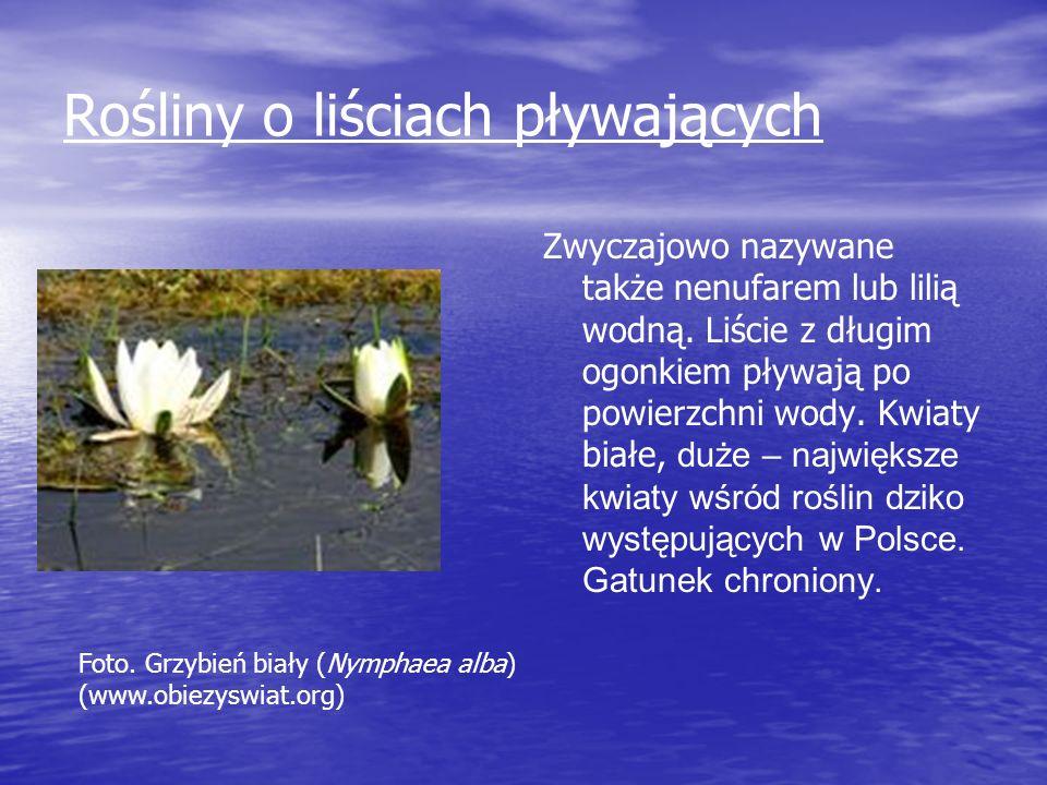 Rośliny o liściach pływających