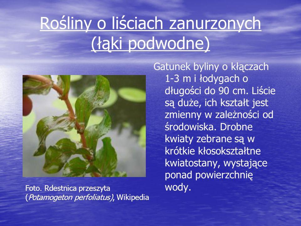 Rośliny o liściach zanurzonych (łąki podwodne)