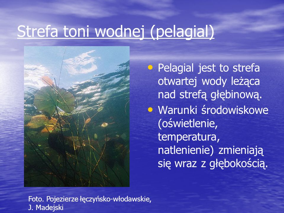 Strefa toni wodnej (pelagial)