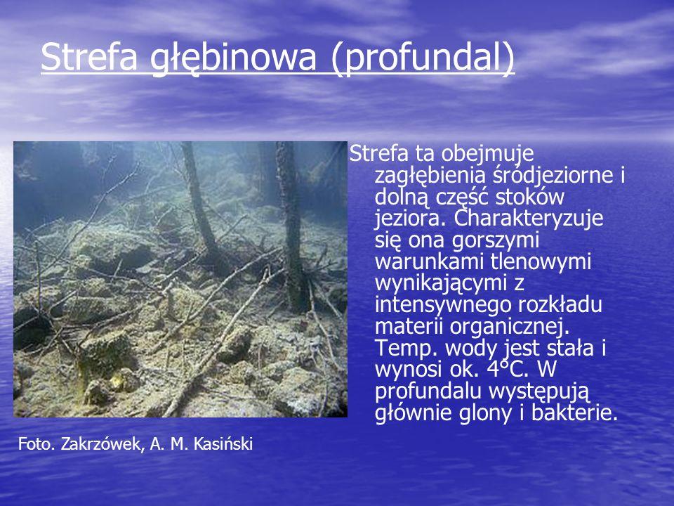 Strefa głębinowa (profundal)