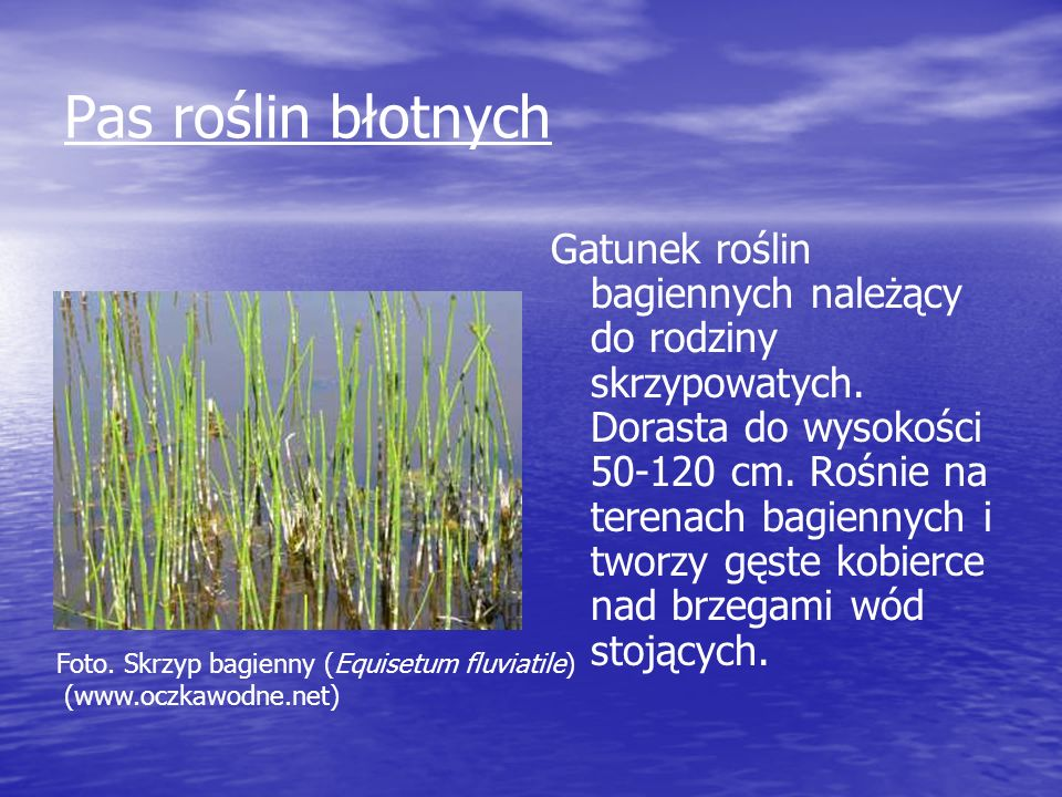 Pas roślin błotnych