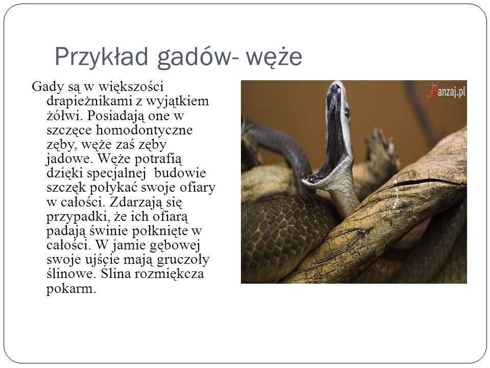 Przykład gadów- węże
