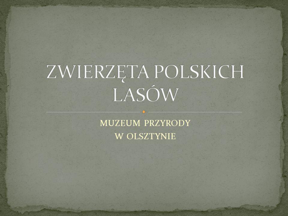 ZWIERZĘTA POLSKICH LASÓW