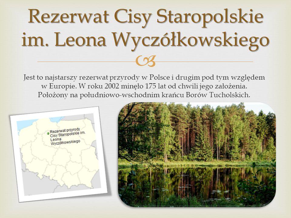 Rezerwat Cisy Staropolskie im. Leona Wyczółkowskiego