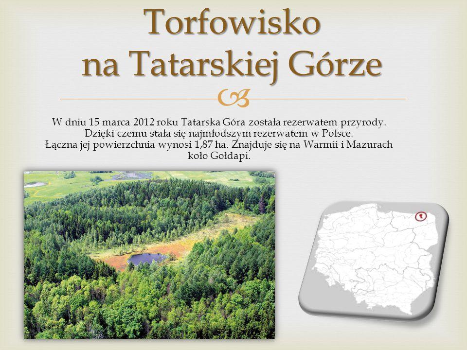 Torfowisko na Tatarskiej Górze