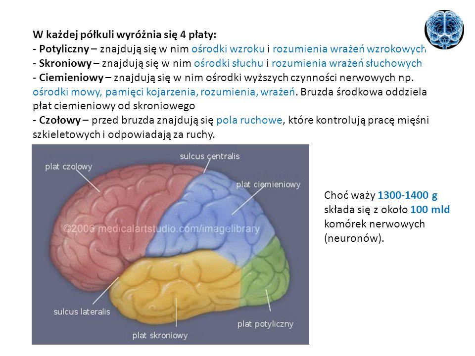 W każdej półkuli wyróżnia się 4 płaty: - Potyliczny – znajdują się w nim ośrodki wzroku i rozumienia wrażeń wzrokowych - Skroniowy – znajdują się w nim ośrodki słuchu i rozumienia wrażeń słuchowych - Ciemieniowy – znajdują się w nim ośrodki wyższych czynności nerwowych np. ośrodki mowy, pamięci kojarzenia, rozumienia, wrażeń. Bruzda środkowa oddziela płat ciemieniowy od skroniowego - Czołowy – przed bruzda znajdują się pola ruchowe, które kontrolują pracę mięśni szkieletowych i odpowiadają za ruchy.