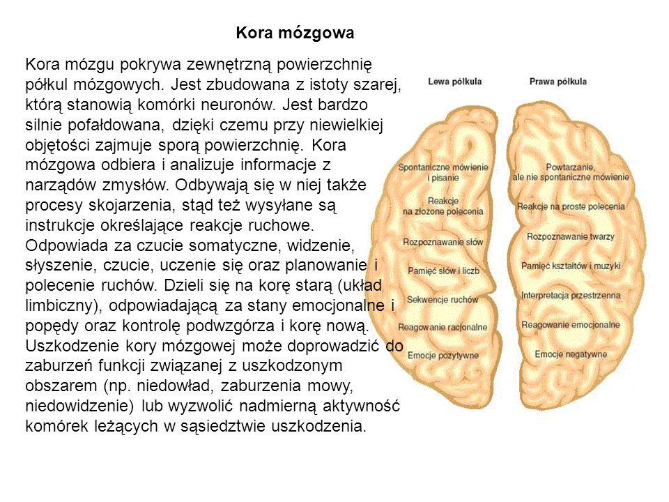 Kora mózgowa
