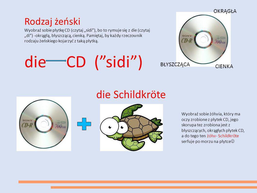 die CD ( sidi ) die Schildkröte Rodzaj żeński OKRĄGŁA BŁYSZCZĄCA