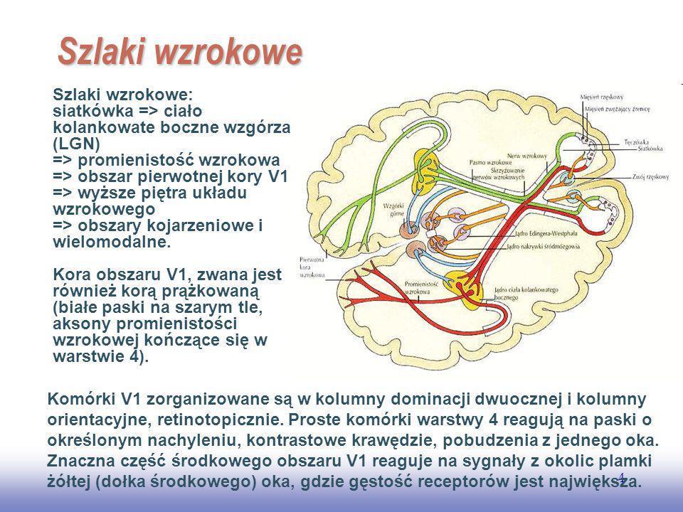 EE141 Szlaki wzrokowe.