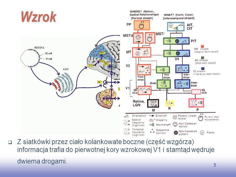 EE141 Wzrok.