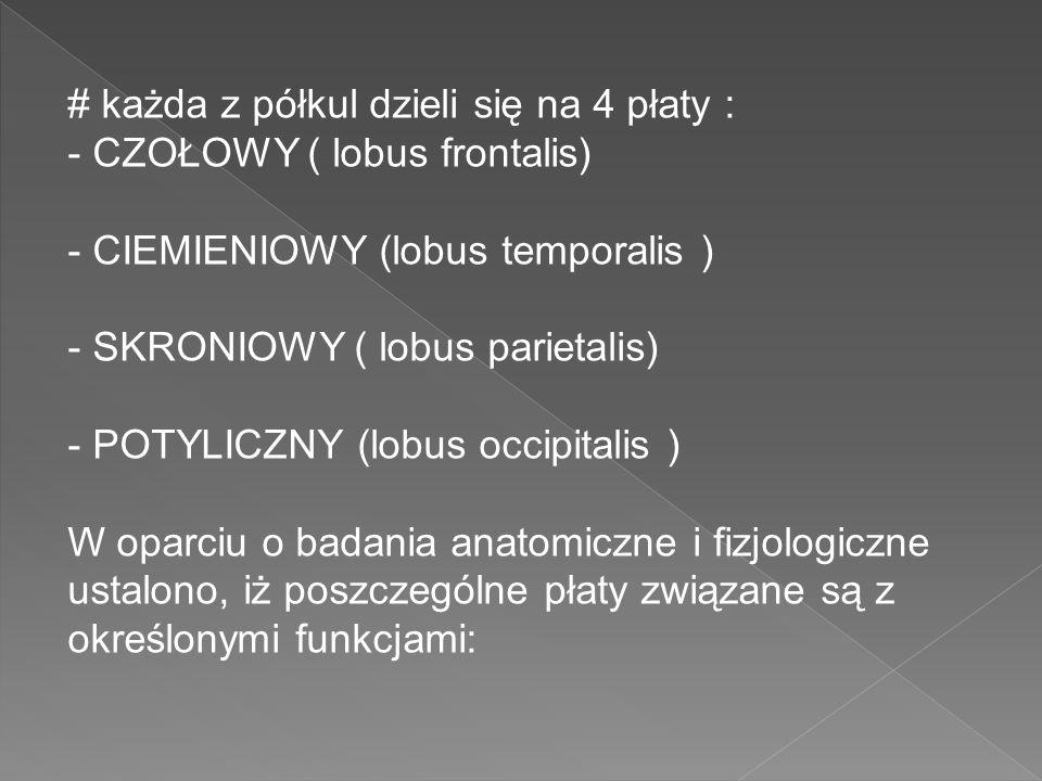 # każda z półkul dzieli się na 4 płaty : - CZOŁOWY ( lobus frontalis) - CIEMIENIOWY (lobus temporalis ) - SKRONIOWY ( lobus parietalis) - POTYLICZNY (lobus occipitalis ) W oparciu o badania anatomiczne i fizjologiczne ustalono, iż poszczególne płaty związane są z określonymi funkcjami: