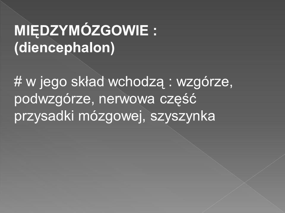 MIĘDZYMÓZGOWIE : (diencephalon)
