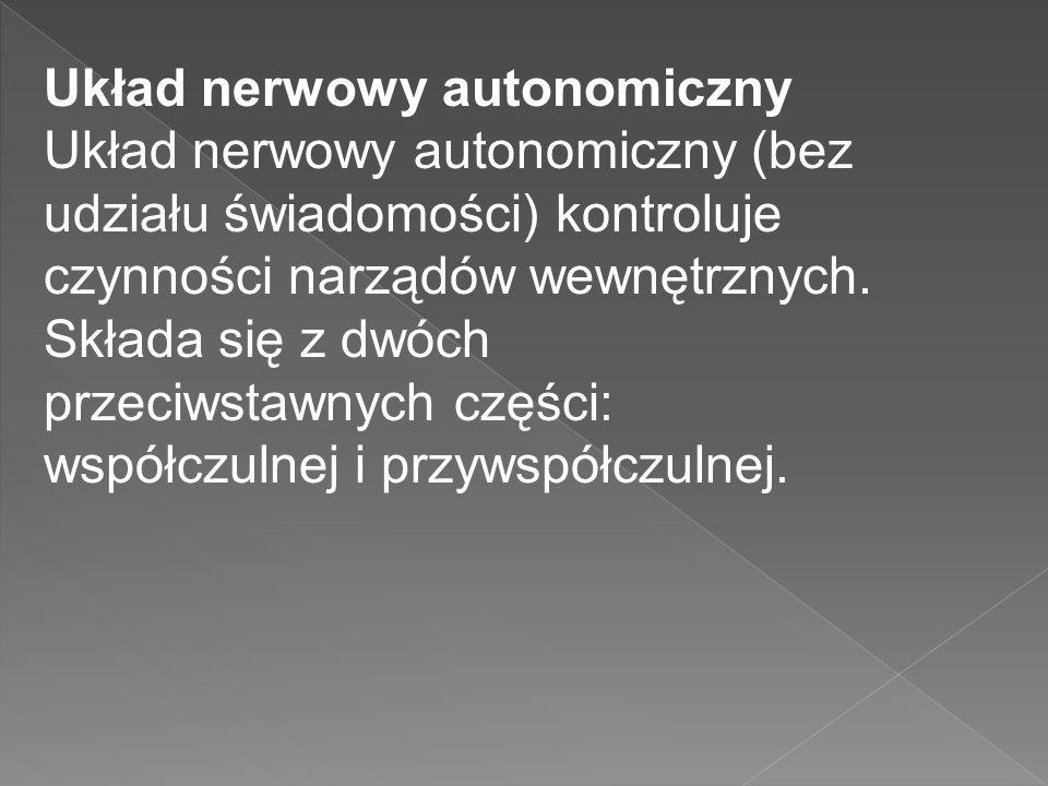 Układ nerwowy autonomiczny