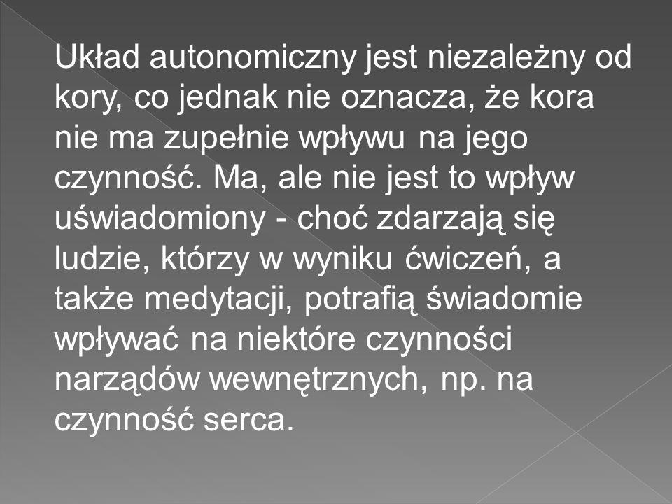 Układ autonomiczny jest niezależny od kory, co jednak nie oznacza, że kora nie ma zupełnie wpływu na jego czynność.