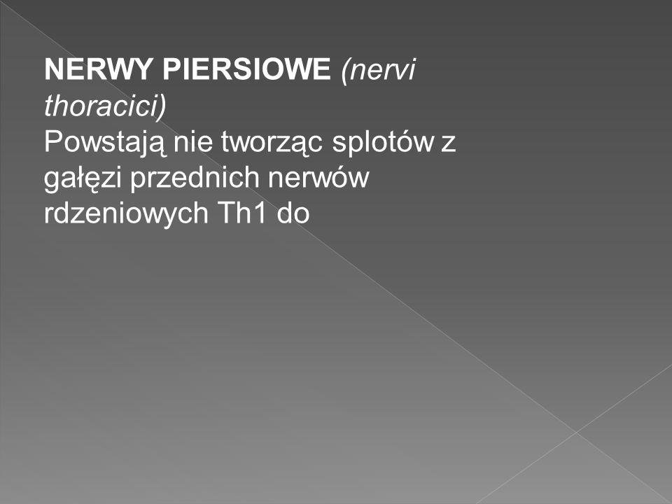 NERWY PIERSIOWE (nervi thoracici)