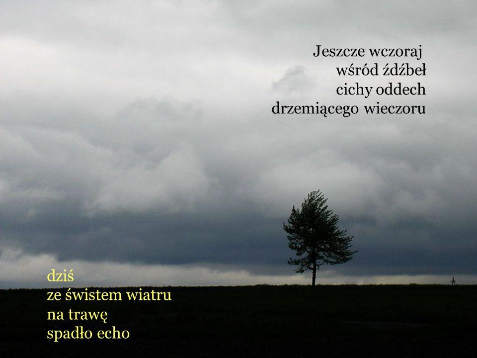 Jeszcze wczoraj wśród źdźbeł. cichy oddech. drzemiącego wieczoru. dziś. ze świstem wiatru. na trawę.