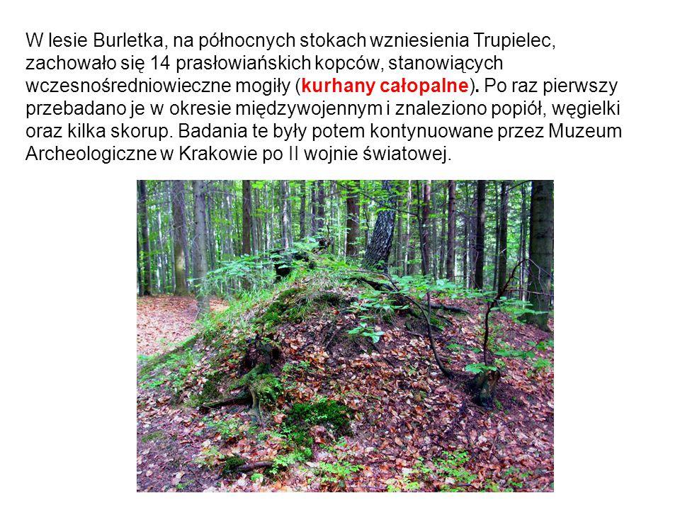 W lesie Burletka, na północnych stokach wzniesienia Trupielec, zachowało się 14 prasłowiańskich kopców, stanowiących wczesnośredniowieczne mogiły (kurhany całopalne).