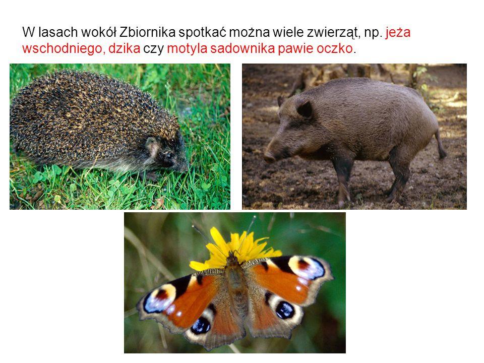 W lasach wokół Zbiornika spotkać można wiele zwierząt, np