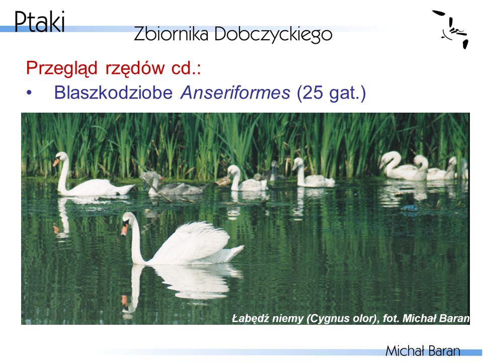 Przegląd rzędów cd.: Blaszkodziobe Anseriformes (25 gat.)
