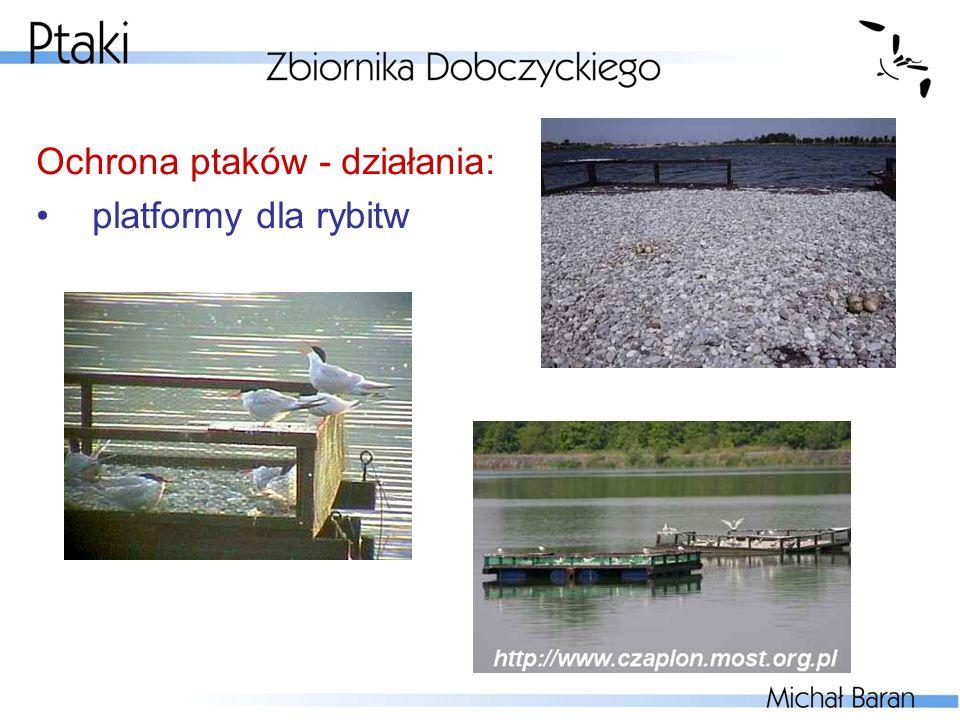 Ochrona ptaków - działania: