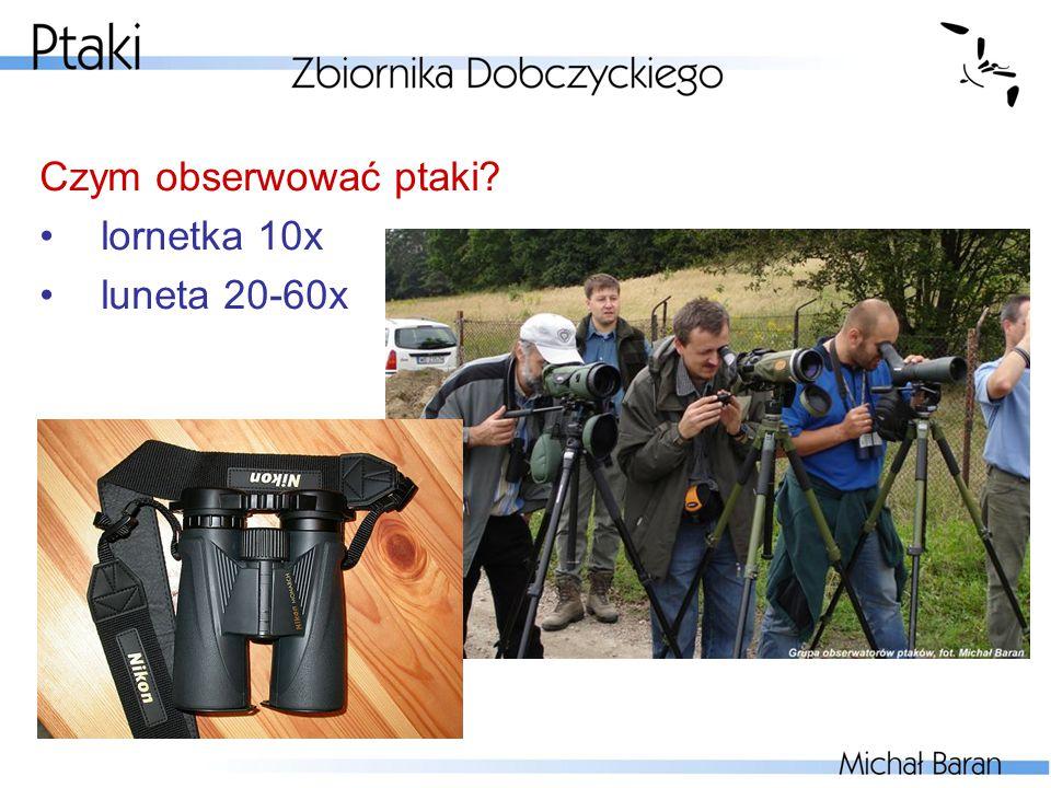 Czym obserwować ptaki lornetka 10x luneta 20-60x