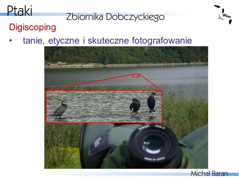 Digiscoping tanie, etyczne i skuteczne fotografowanie