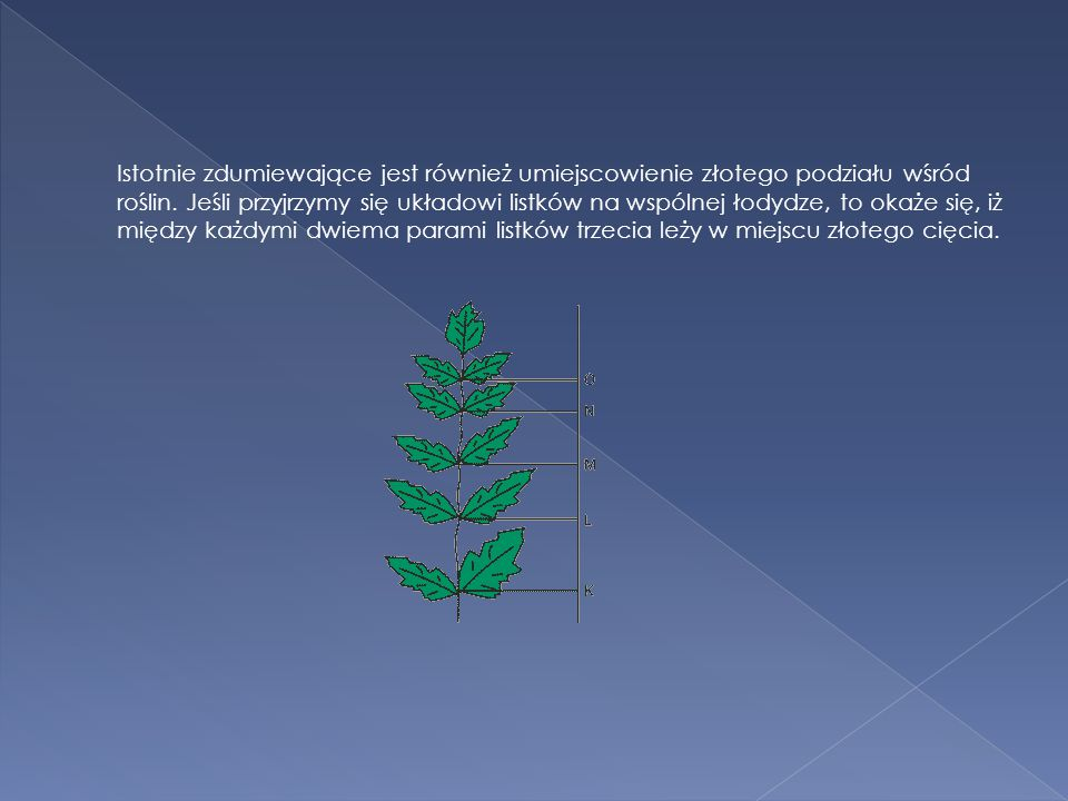 Istotnie zdumiewające jest również umiejscowienie złotego podziału wśród roślin.