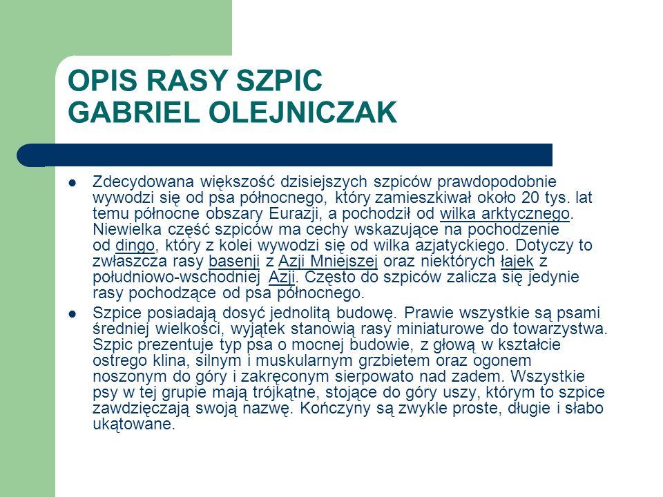 OPIS RASY SZPIC GABRIEL OLEJNICZAK