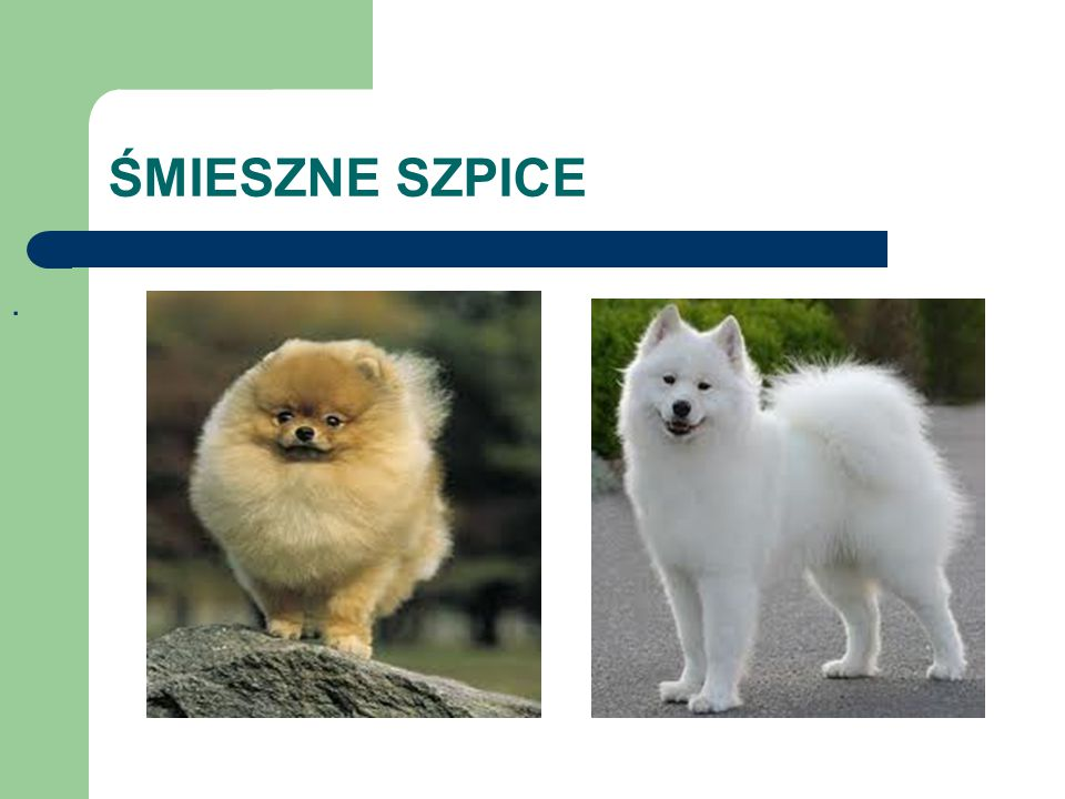 ŚMIESZNE SZPICE .