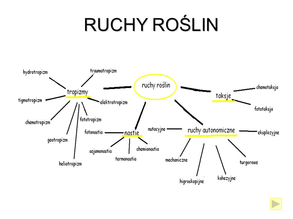 RUCHY ROŚLIN