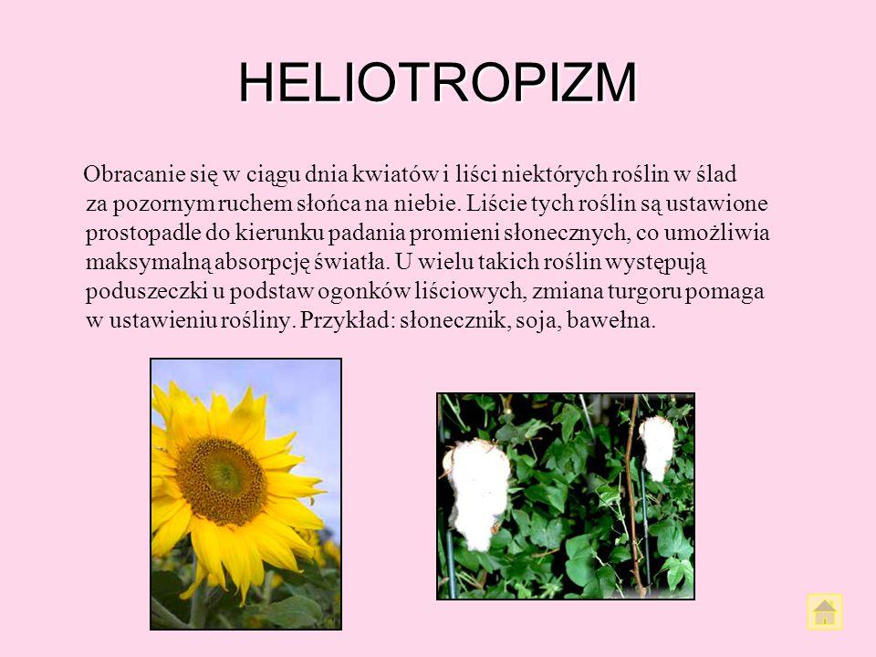 HELIOTROPIZM