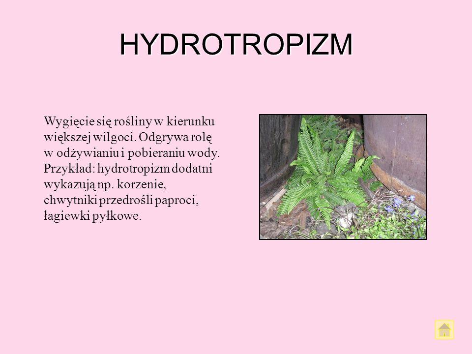 HYDROTROPIZM