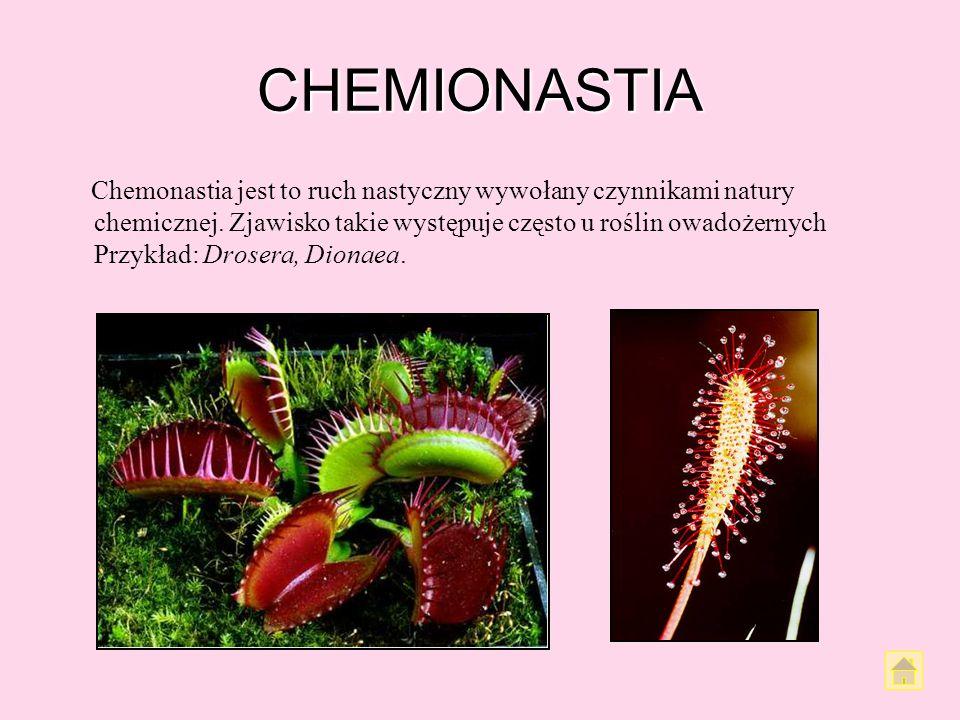 CHEMIONASTIA