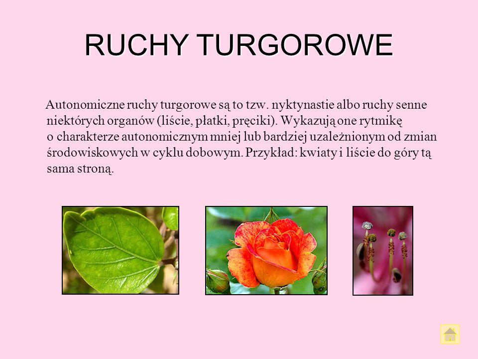 RUCHY TURGOROWE