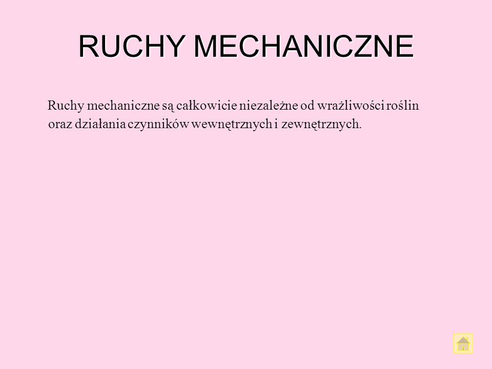 RUCHY MECHANICZNE Ruchy mechaniczne są całkowicie niezależne od wrażliwości roślin oraz działania czynników wewnętrznych i zewnętrznych.