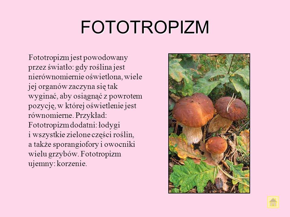 FOTOTROPIZM